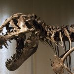 Best Museums To See Dinosaur Fossils