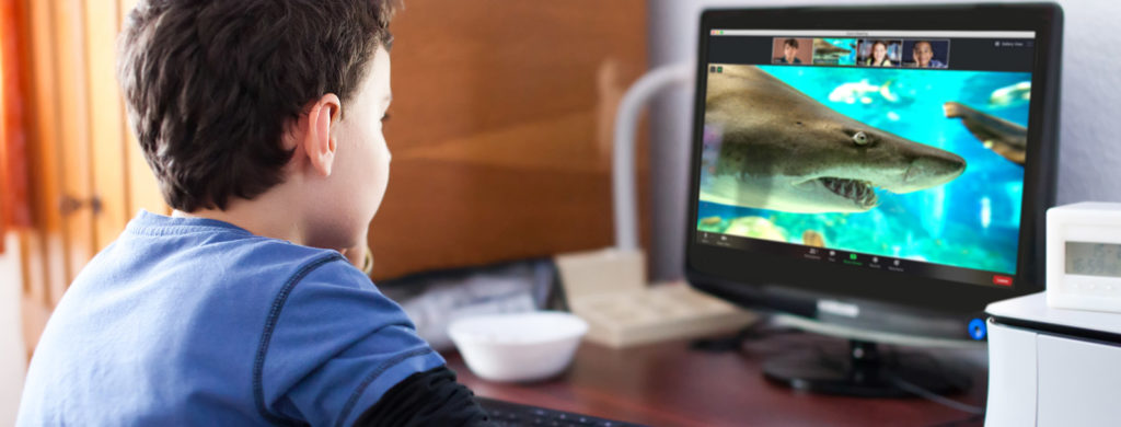 Embark on a Virtual STEM Experience with the Southwestern Institutions