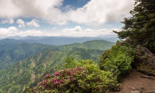 6 Must-See National Parks in the Southeastern United States for Students